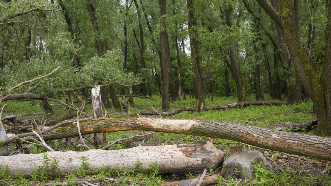 bomen planten nederland